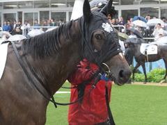 20170917 中山5R 2歳牝馬メイクデビュー ショウナンアーデン 06