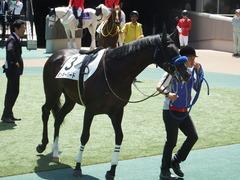 20180421 東京6R 3歳未勝利 ミッキーバード 12