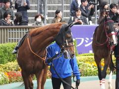 20161127 東京7R ベゴニア賞 クライムメジャー 04