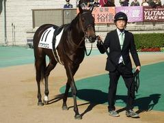 20181125 東京4R 2歳メイクデビュー ホウオウヒミコ 08