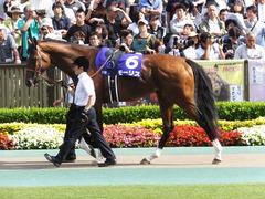 20150607 東京11R 安田記念(G1) モーリス 04
