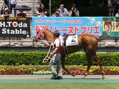 20150510 東京5R 3歳未勝利 レーヌドブリエ 03