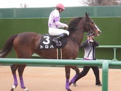 20190323 中山9R ミモザ賞 3歳牝馬(500) トロハ 13