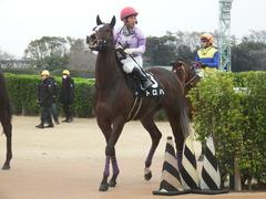 20190323 中山9R ミモザ賞 3歳牝馬(500) トロハ 18