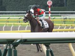 20170625 東京1R 3歳牝馬未勝利 プンメリン 29