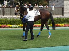 20141026 東京4R ラッシュアタック 09