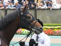 20141026 東京8R オウケンブラック 08