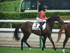 20190916 中山5R 2歳牝馬メイクデビュー バイカル 13