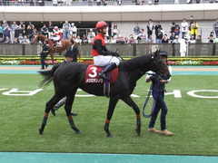 20141012 東京8R 東京HJ メジロサンノウ 09