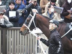 20150222 東京11R 金蹄S ショウナンアポロン 02