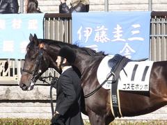 20150131 東京2R 3歳未勝利 コスモポッポ 05