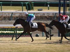 20150125 中山5R 3歳未勝利 トーセンカナロア 16