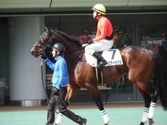 20180217 東京4R 4歳上障害未勝利 アークアーセナル 14
