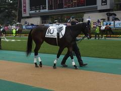 20141012 東京4R ウインメアリー 02