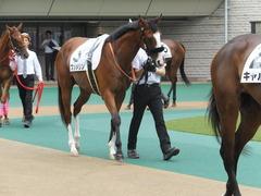 20170625 東京1R 3歳牝馬未勝利 プンメリン 03