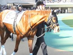 20160131 東京1R 3歳未勝利 ホウオウマリリン 03