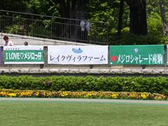 20140503 東京11R 青葉賞 ショウナンラグーン 01