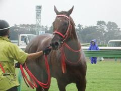 20180929 中山5R 2歳牝馬メイクデビュー オトナノジジョウ 30