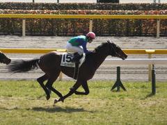 20150221 東京5R 3歳未勝利 トーセンカナロア 14