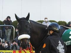 20140119 中山競馬場 ショウナンラグーン 09