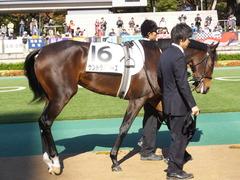 20131116 東京 サンドラバローズ06