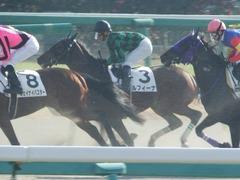 20171216 中山2R 2歳牝馬未勝利 ルフィーナ 11