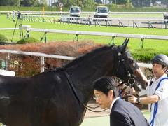 20151121 京都1R 2歳未勝利 アドマイヤムテキ 18