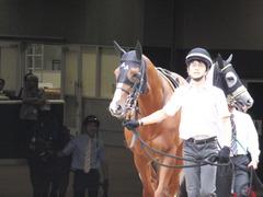 20161009 東京10R テレビ静岡賞(1600) ランドマーキュリー 02