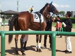 20190928 中山5R 2歳牝馬メイクデビュー アルソリート 19