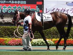 20170604 東京4R 3歳未勝利 ホウオウドリーム 06