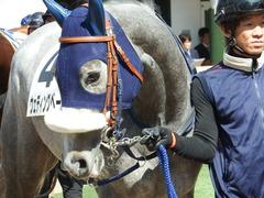 20180304 中山5R 3歳牝馬未勝利 プラチナベール 08