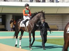 20150221 東京2R 3歳未勝利 コスモポッポ 06
