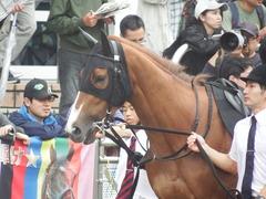 20180930 中山9R サフラン賞 2歳牝馬500万下 ポリアンサ 05