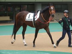 20190609 東京7R 3歳上1勝 ピンシェル 03