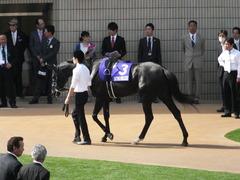 20140504 京都11R 天皇賞春 サトノノブレス 09