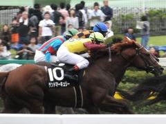 20161009 東京10R テレビ静岡賞(1600) ランドマーキュリー 15