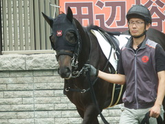 20190622 東京3R 3歳未勝利 ショウナンサジン 11