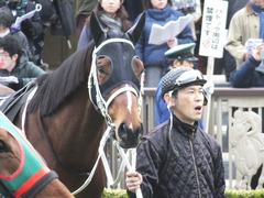 20150222 東京11R 金蹄S ショウナンアポロン 06