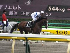 20160528 東京9R 富嶽賞(1000) プエルト 16