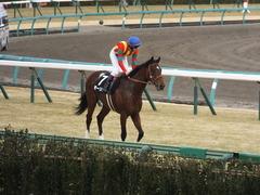 20150125 中山10R 若潮賞 モーリス 17