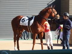 20181228 中山2R 2歳牝馬未勝利 パーフェクトワン 17