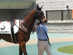 20170506 東京5R 3歳牝馬500万下 ビルズトレジャー 03