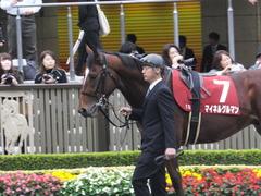 20141108 東京11R 京王杯2歳S マイネルグルマン 03