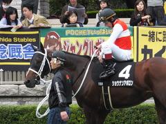 20151031 東京10R 赤富士S ショウナンアポロン 14