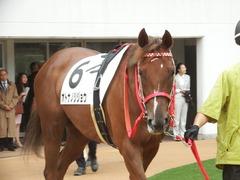 20180929 中山5R 2歳牝馬メイクデビュー オトナノジジョウ 10