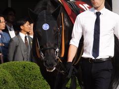 20150927 中山11R オールカマー サトノノブレス 05