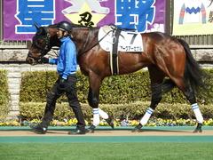 20180217 東京4R 4歳上障害未勝利 アークアーセナル 03