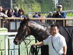 20161105 東京4R 2歳未勝利 アドマイヤシナイ 21