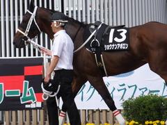 20170624 函館11R 大沼S (OP) ショウナンアポロン 06