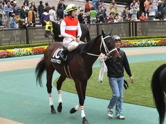 20141108 東京9R ショウナンアポロン 12